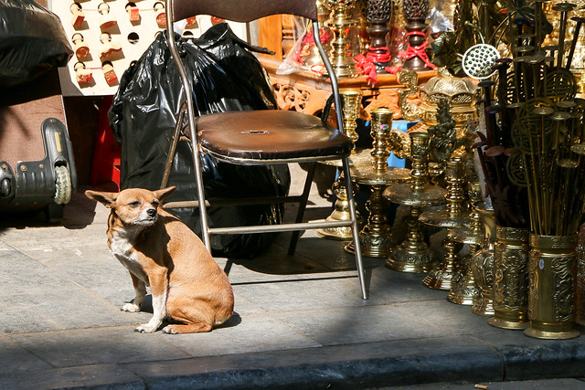 A dog in Hanoi old city, Vietnam ハノイ旧市街の犬