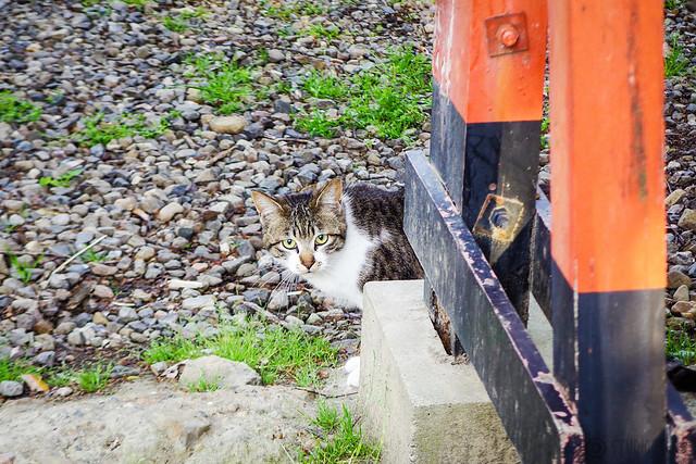 Today's Cat@2016-04-18