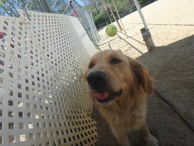 4/24/16 Tennis Play!
