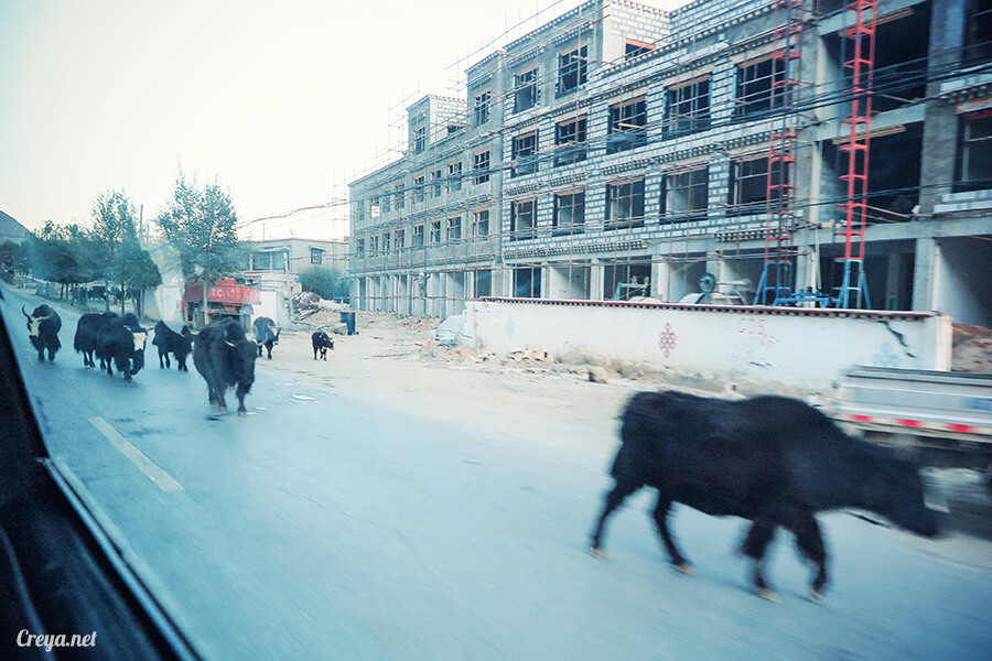 2015.12.29 ▐ Tibet 西藏踢北去 ▐ 身心大突破的公路之旅,從拉薩一路向東到林芝(上集 - 米拉山口與如廁記) 08.jpg