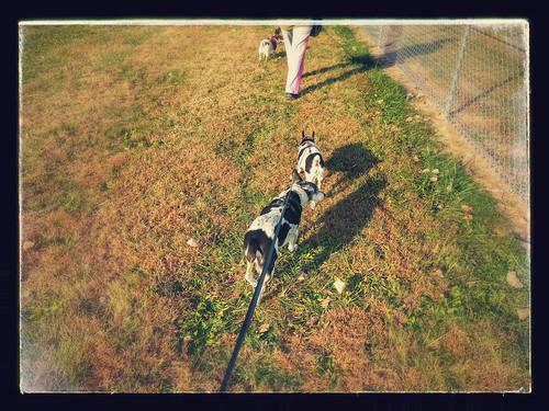 2015-11-10 - Smith's Fork Park (SC) - 0001 [flickr]