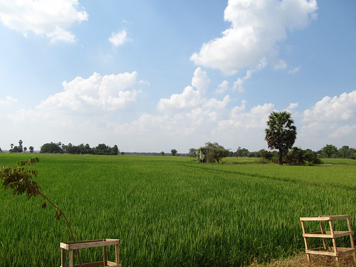 La campagne de Battambang: les rizières
