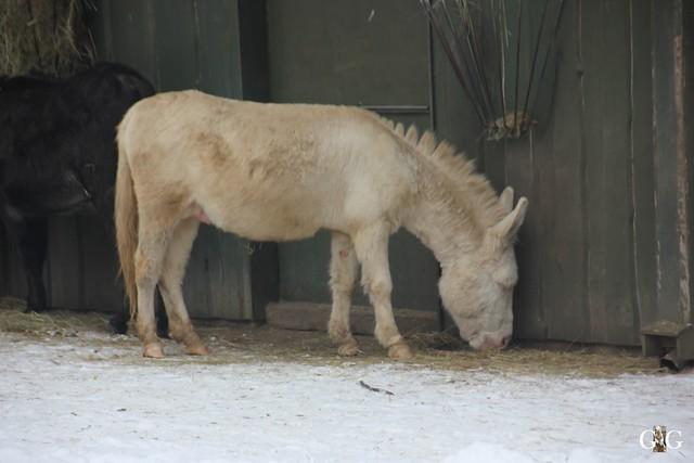 Besuch Zoo Rostock 23.01.2016100