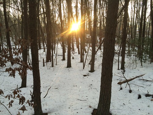 Sunset in Snowy Woods