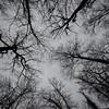 week 05 - black and white