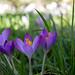 spring! by sue921
