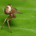 Small orb web spider practicing ballet moves by Lord V
