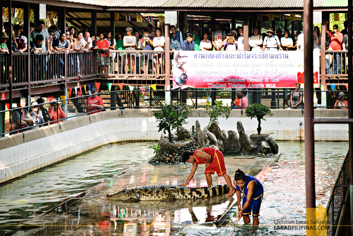 Samphran Elephant Ground & Zoo Croc Wrestling Show