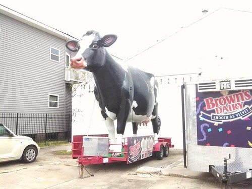 Brown's cow