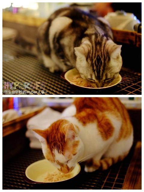 25503944833 3ca89a821d z - 超可愛貓咪寵物餐廳【巷子有貓】,逢甲巷弄無菜單美食~一定要預約才吃的到的日式家常菜!(已歇業)