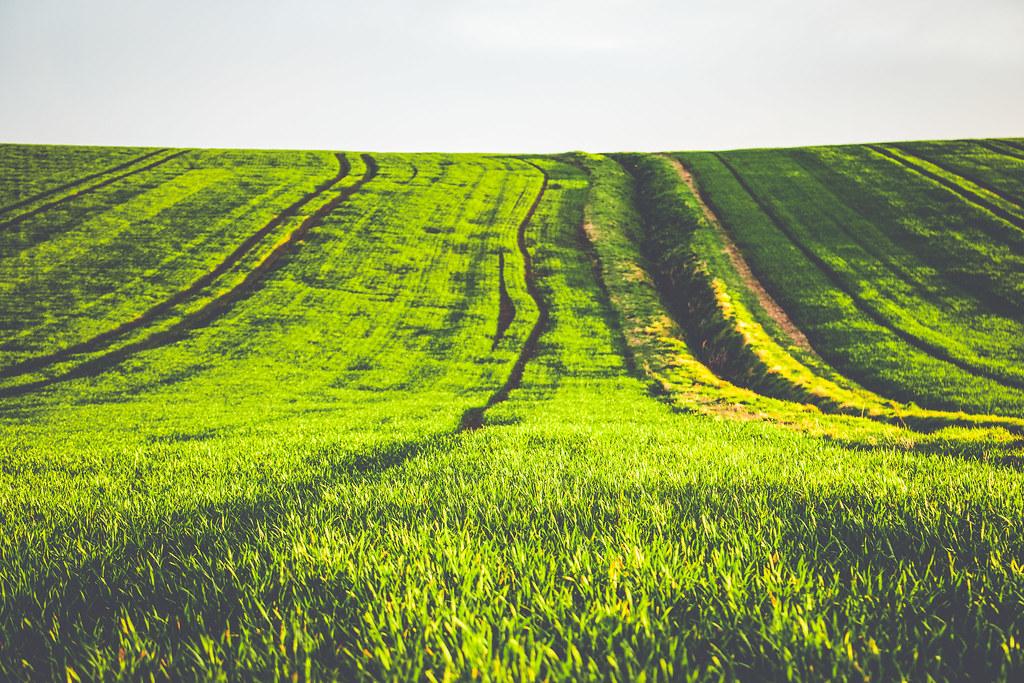 Green to Grow
