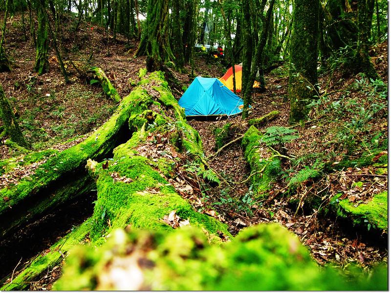 魔幻森林營地 3