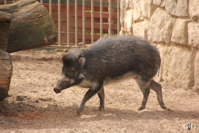 Frühlingstag im Zoo Berlin 03.04.201681