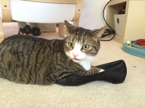 Amelia Cat likes Mom's shoes