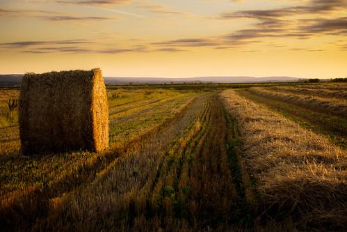 canada color colour field evening novascotia harvest round hay bale grandpre cans2s fujixe2