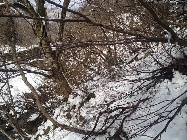 土蔵岳 支尾根 小屋から谷内へ