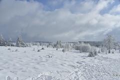 Les grandes étendues de Hautes Fagnes en hiver