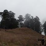 Hacia la niebla