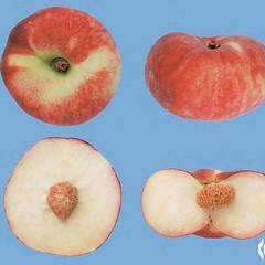 peaches-0011