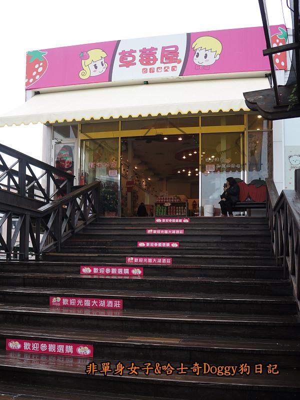 苗栗草莓大湖酒莊清安洗水坑豆腐街17