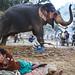 Elephant - Sonepur, India by Maciej Dakowicz