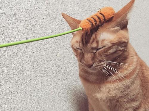 めっちゃ眠い・・・😔😔😔 #cat #cats #catsofinstagram #catstagram #instacat #instagramcats #neko #nekostagram #猫 #ねこ #ネコ# #ネコ部 #猫部 #ぬこ #にゃんこ #フワモコ部