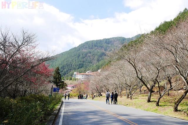 合歡山&武陵農場 (45)