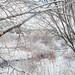 Mink Creek in Winter - Idaho by petechar