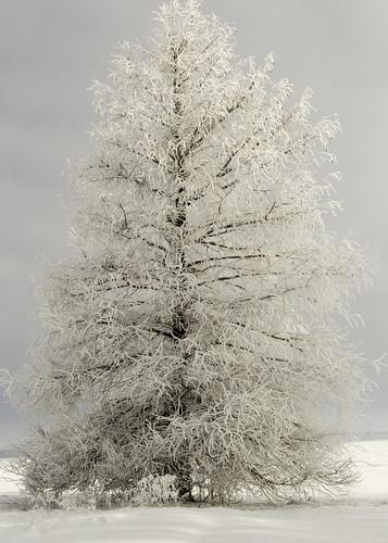 snow hoarfrost