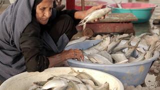 The Fish Market in Bandar Abbas, Iran 21