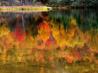 Reflected Autumn Foliage