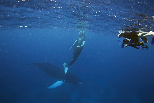 swimmers with whale (griet)_v1