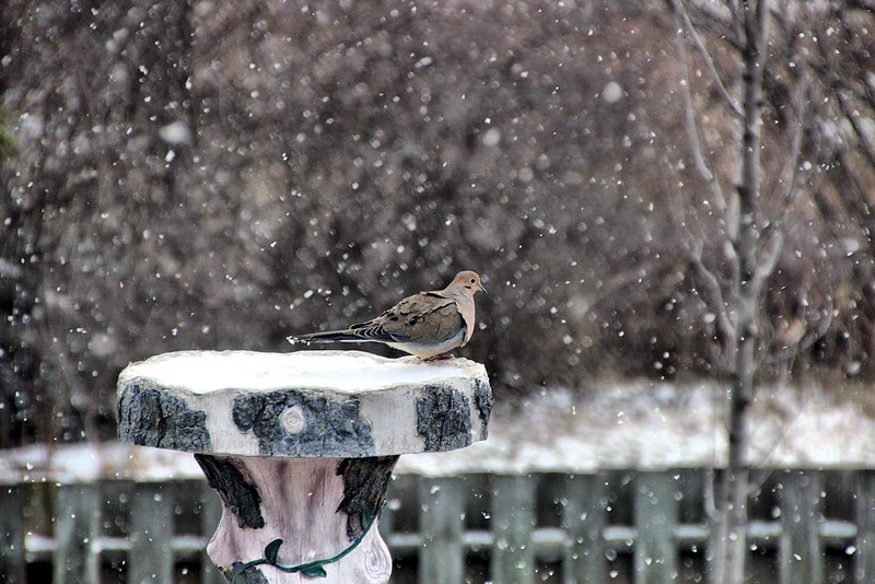 Project 366, Day 98: At The Bird Bath