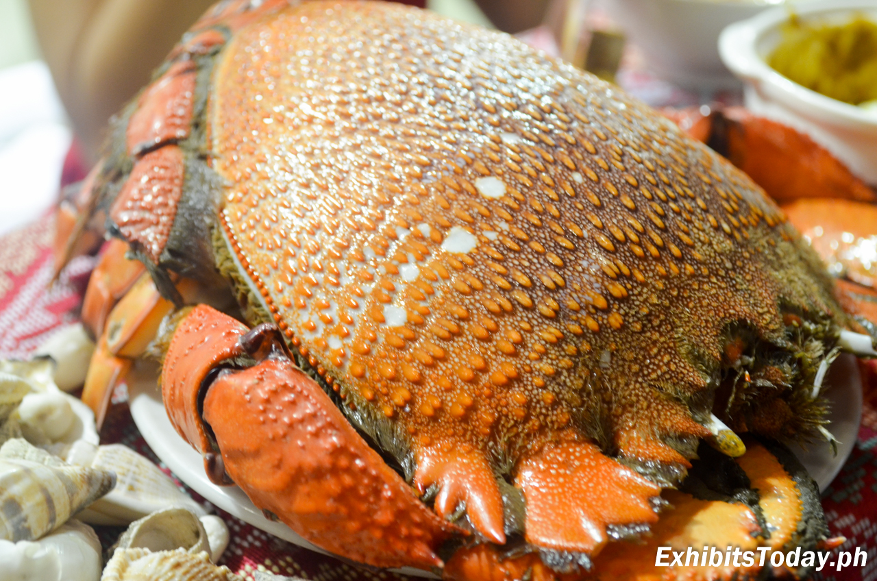 Curacha also known as spanner crab