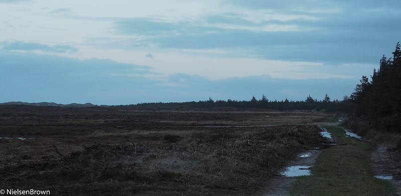 Morning in Stenbjerg Klitplantage