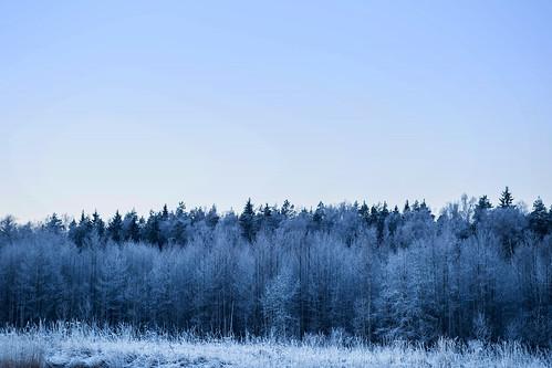 blue winter cold ice sunrise canon countryside frozen forrest country before latvia freeze latvija ziema baltci