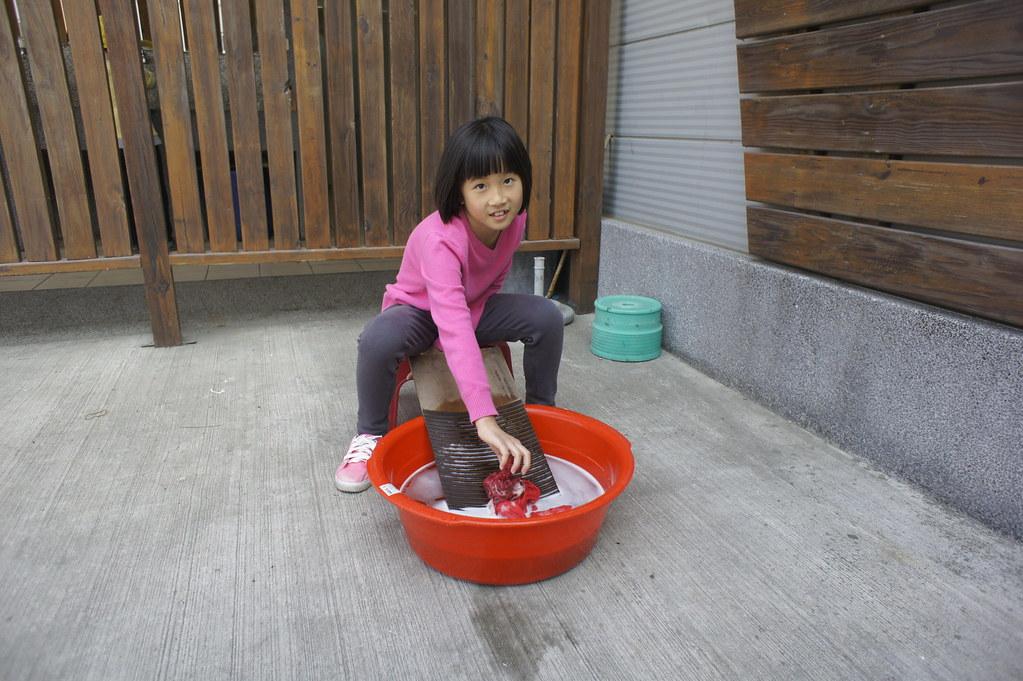 台南市安定區古寶無患子 (19)