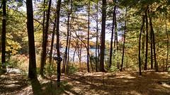 En route to Thoreau's cabin site