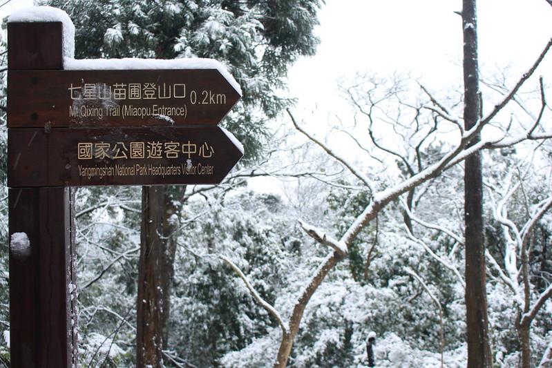 2016-台北陽明山-瑞雪-難得一見的雪白山景-17度C隨拍 (53)