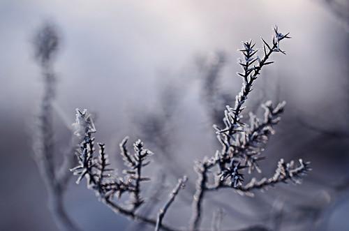 morning schnee winter snow ice sunrise frost eis sonnenaufgang morgen