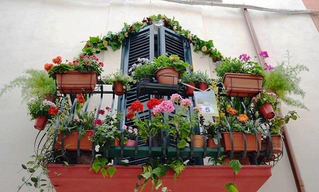 Noicattaro. Balconi Fioriti 2016 intero