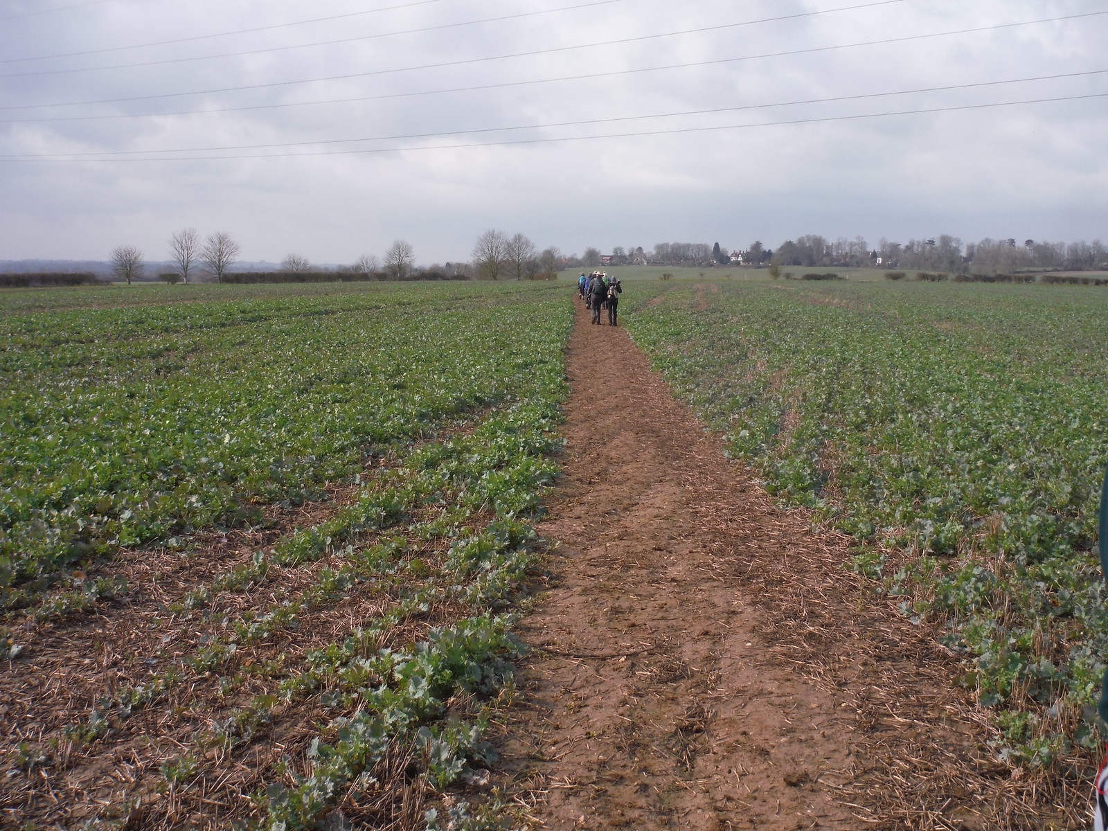 Well-cleared path through large field, Helsthorpe Farm SWC Walk Cheddington to Leighton Buzzard