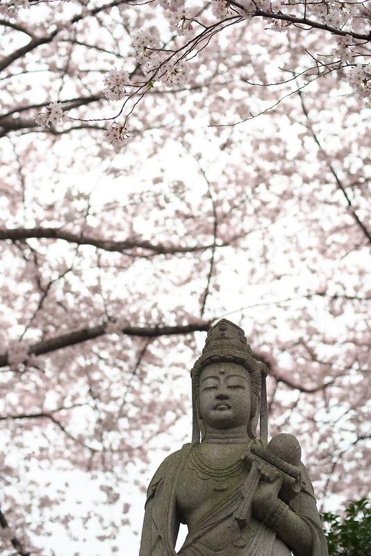 東京路地裏散歩 多宝院の桜 2016年4月2日