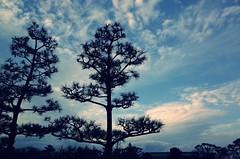 駿府城公園 #静岡