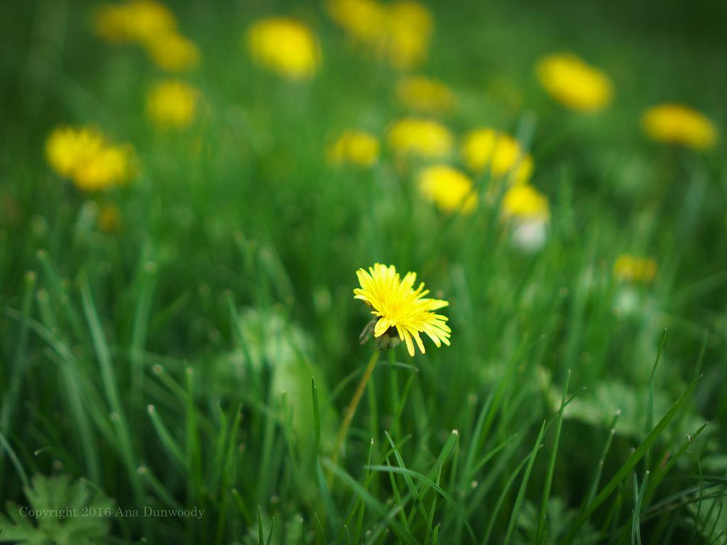 6/365 My Weed-Ridden Yard