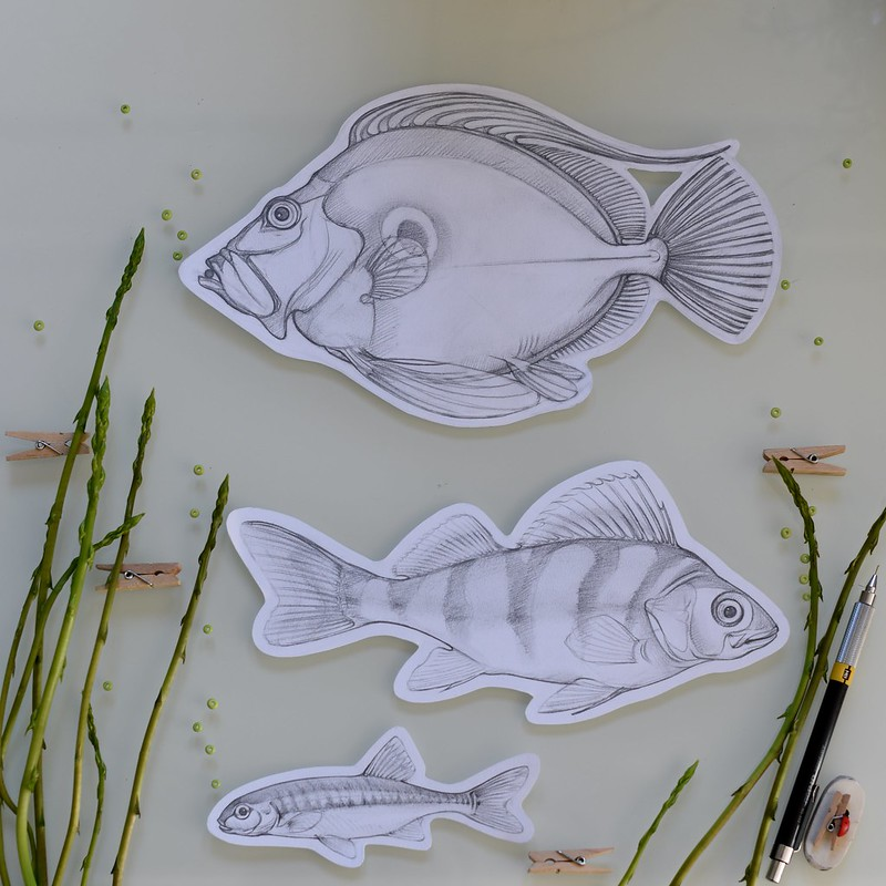 poissonsasperges