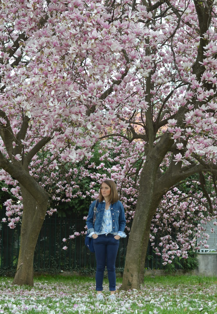 magnolia, tree, wildflower girl, primavera (2)