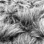 Grass Cliche