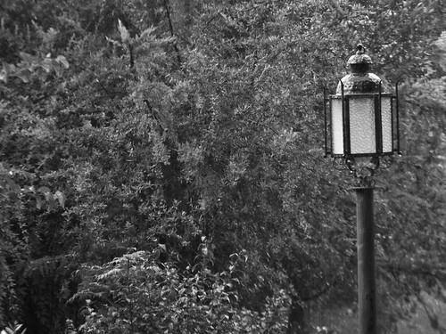 lluvia en blanco y negro