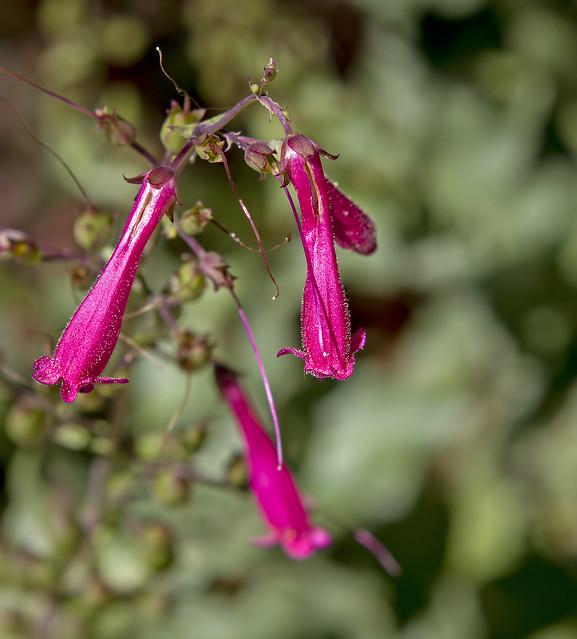 Wild Flower 15_7d1__240416